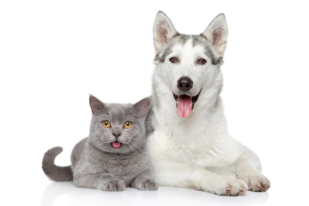 Jak uchronić naszego pupila: psa lub kotka przed zaginięciem?